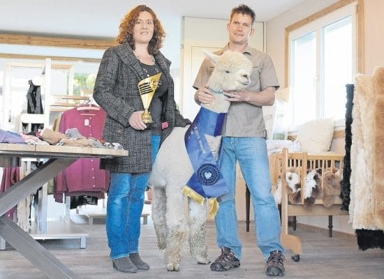 Familie Bischofberger – Alpakazüchter